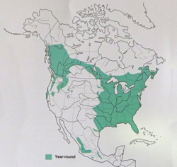Barred Owl distribution in 2000