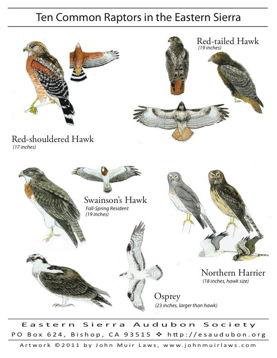 Ten Common Raptors of the Eastern Sierra Poster