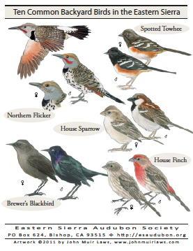 Ten Backyard Birds Poster